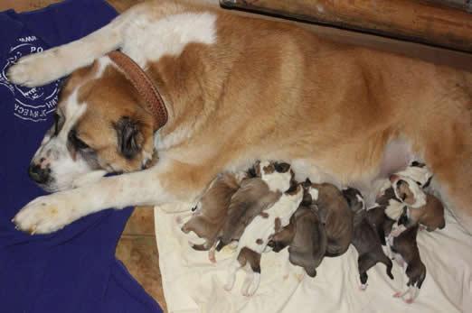 продажа щенков в питомнике сары шайтан